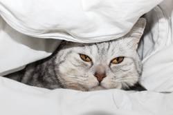 Müde im Bett