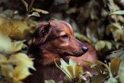 Biko, der kleine Angsthase