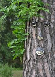Alt wie ein Baum............