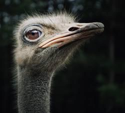 Ein Straußenvogel namens ´maspi`................