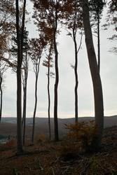 Waldskelett