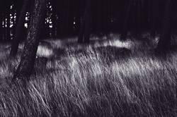 Nachts sind alle Bäume grau.