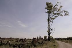 Tschüss Wald, Hallo Baum