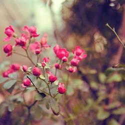 Dankbare Blüher