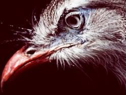 Auge + Schnabel = Vogel