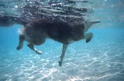 und er schwimmt doch!