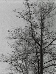 Knospen im Niesel-Nebel
