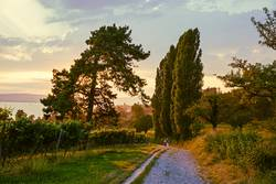 Toskana-Stimmung am Bodensee