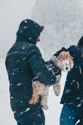 Kleiner Hund blind vor Schnee