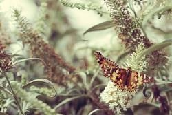 Et je rêve des papillons