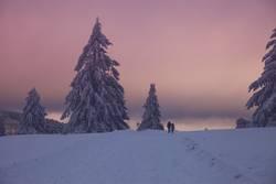 Rosa Winterwunderland