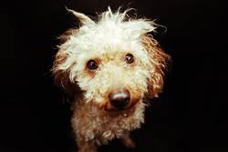 Der traurigste Hund der Welt.