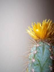 Kaktus rechts außen