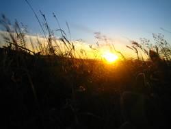 Sonnenuntergang im Gras