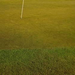 Auf dem Golfplatz I