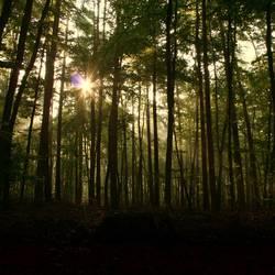 Damals im Wald