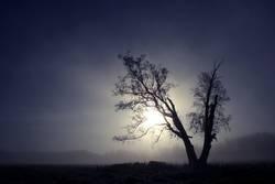 Baum am Morgen