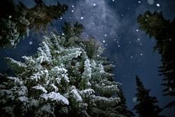 Geist der vergangenen Weihnacht