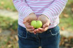 Child holding green apple. Hearth shape