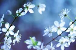 Blumenmeer das zweite