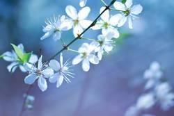Blumenmeer das vierte