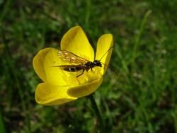 insektenmittagspause