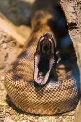 Snake at the dentist