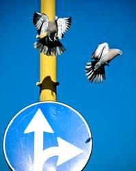 Flugverkehrsregelung