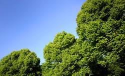 Grüne Ecken