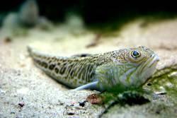 fisch-siesta