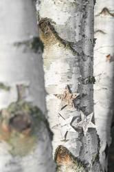 Sternenbaum