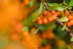 Herbstfarbtupfer