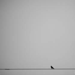 lonesome piepmatz