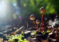 sunlight funghi