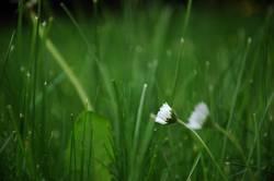 Blumen haben eine Seele