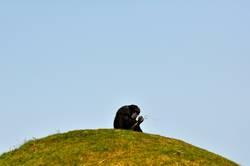 Affe aufm Hügel