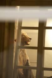 Da ist der Bär los