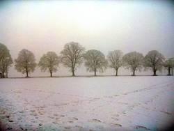Bäume bei minus 14 Grad