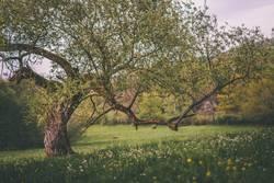 Knorriger alter Baum