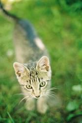 Scharfes Kätzchen