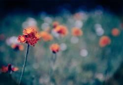 Sick::Flower::Dancin'