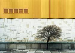 Baum vorm Haus