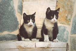 Portrait of cute kittens
