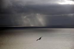 Seagull Atlantic Sea