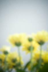 Kommunikation durch Blumen