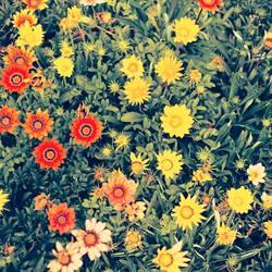bauer sucht flower