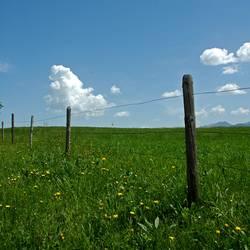 fency grassland