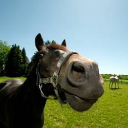 eine pferdestärke