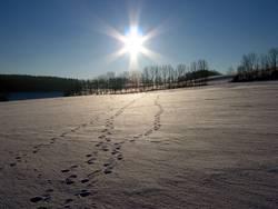 Deine Spuren im S...Schnee