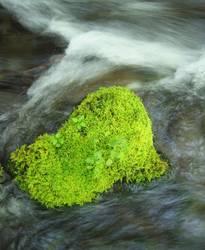 Grün im Fluss
